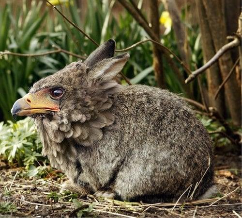 顔がワシ、体がウサギの生物